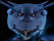 Elektron mikroskobu altında bir Karınca.