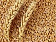 Buğday Tanesi