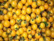 Sarı Domates Resmi