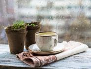 Yağmurda Kahve