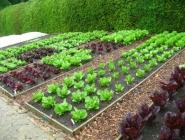 Yeşillik Bahçesi