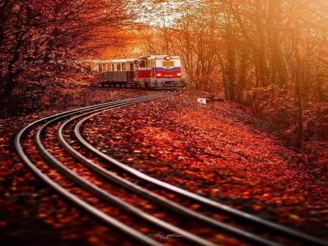 Tren Yolu