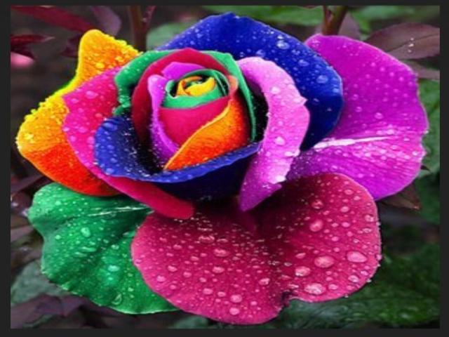 Renkli Çiçek Resmi