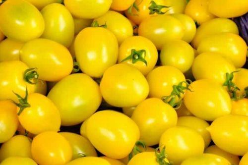Sarı Domates