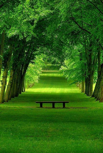 Yeşil Orman Manzarası