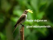 Resimli Kuşlar İle İlgili Sözler İndir